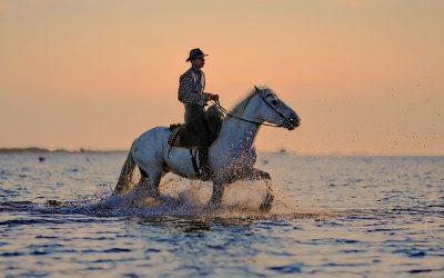 Er vinteren hård ved din hest? Sørg for at holde den varm med vinterudstyr til heste